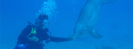 Cozumel-Dive with Dolphins
