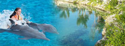 Cozumel-Dolphin Royal Swim+Parques+Transportacin